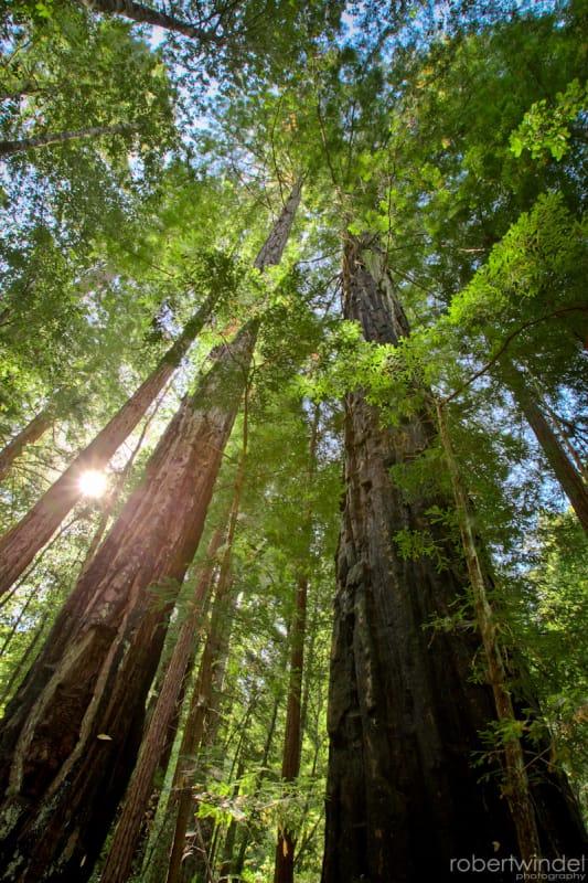 レッドウッド国立公園の画像 p1_34