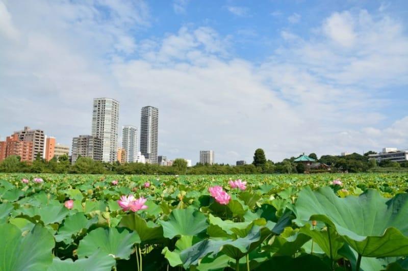 【公園】上野の憩いの場・上野恩賜公園