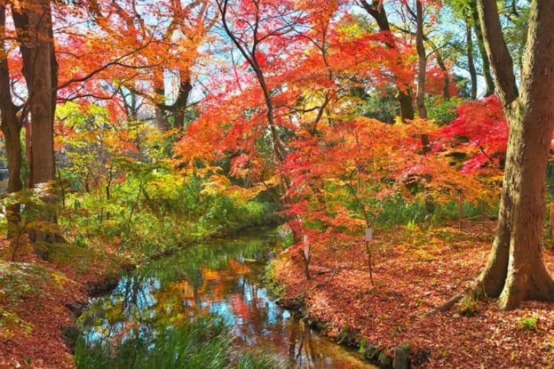美しき原生林 糺の森(下鴨神社境内)