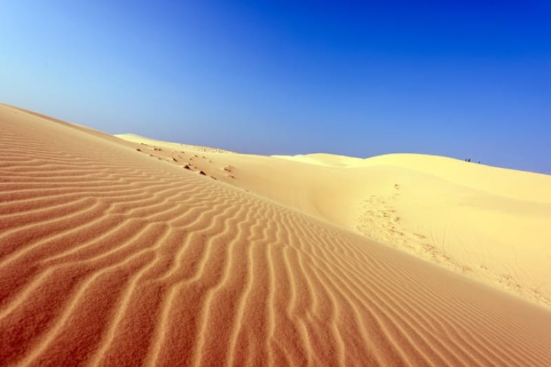 美しい風紋も見られる砂丘