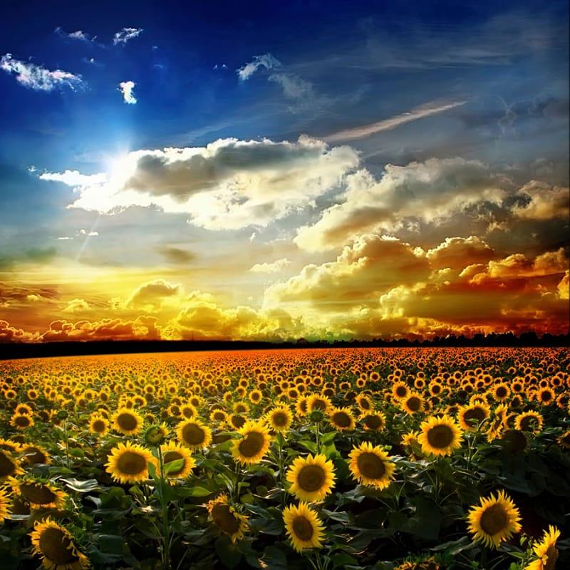初夏に訪れたい、アンダルシアのひまわり畑
