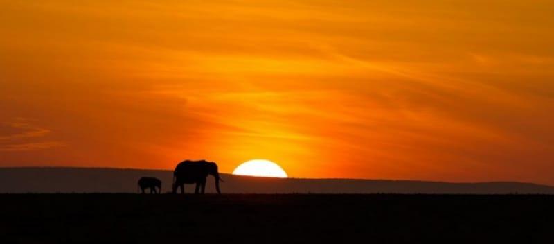 絶対見たい!アフリカの大地に沈む夕日