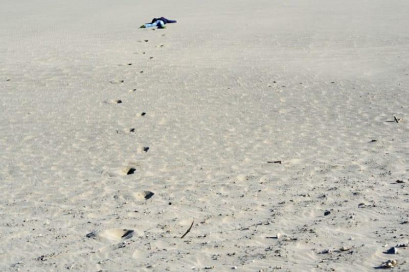 アカウミガメの産卵地 中田島砂丘
