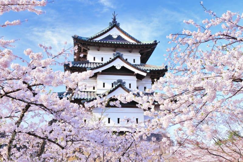 弘前城と桜のコラボレーションも絶景