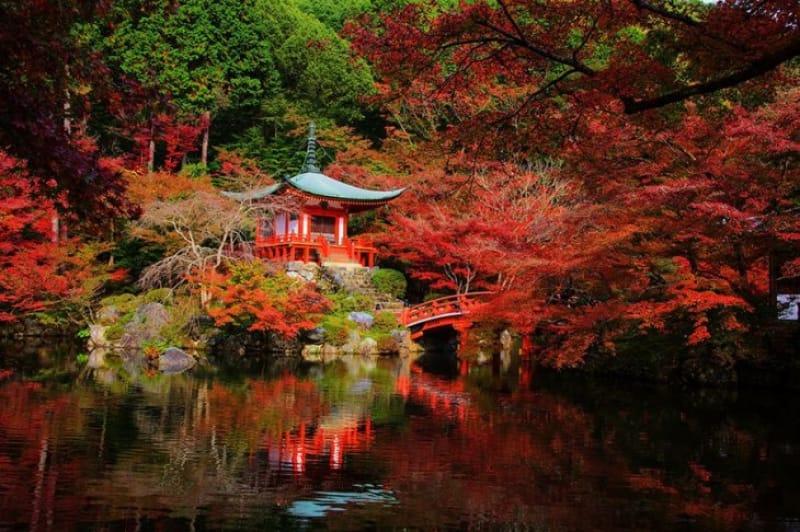 醍醐の花見にも負けない秋の絶景 醍醐寺
