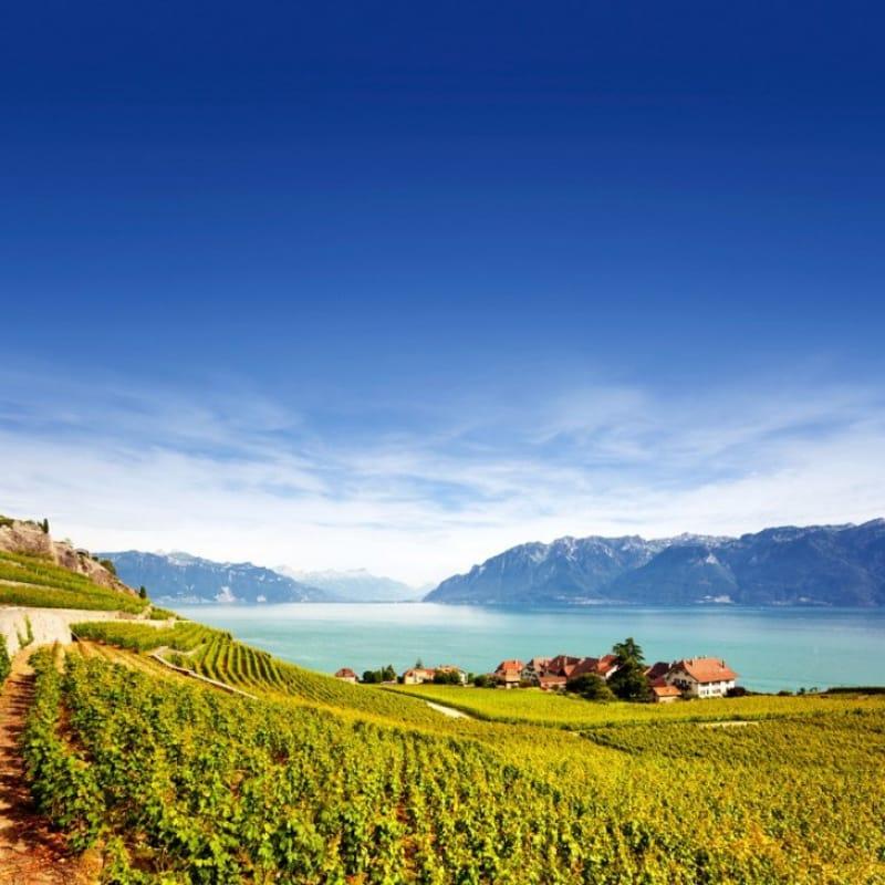 美しい葡萄畑・ラヴォー地区