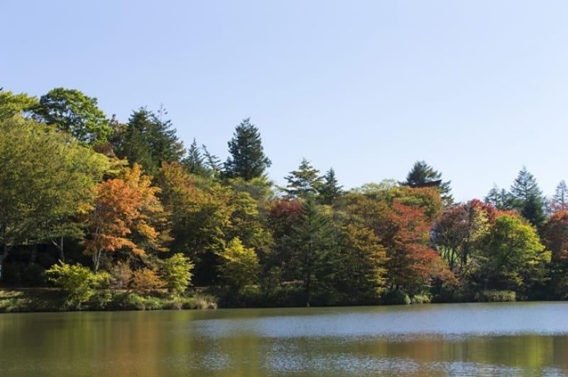 県内で最初に紅葉が色付く・天竜奥三河国定公園
