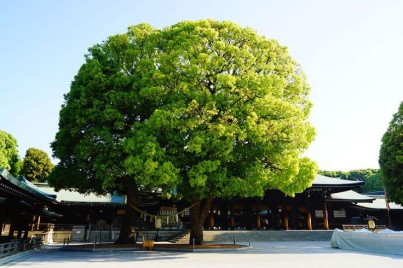 東京都は思えぬ緑豊かな境内