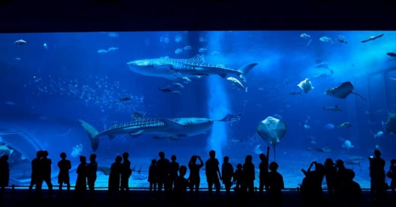 定番も穴場も行って欲しい、美ら海水族館