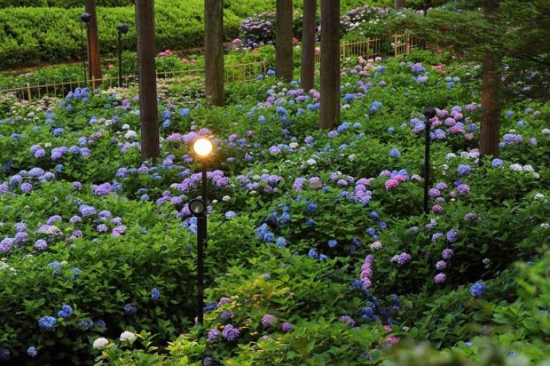 5000坪もの広さがある庭園