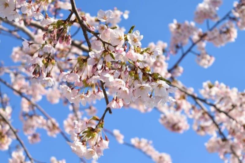 97409:自然の懐に抱かれてこそ、北海道の良さが分かる