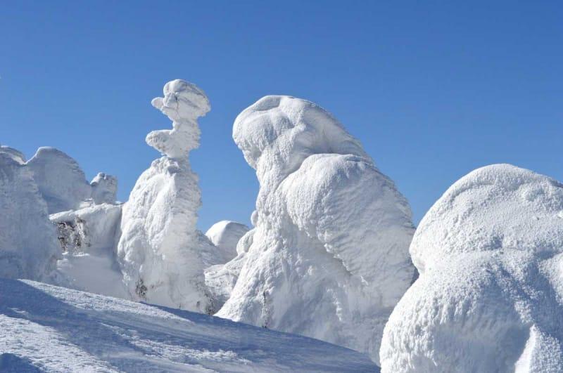 蔵王の樹氷は何が違うの?