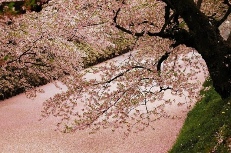 春夏秋冬、様々な顔を見せる桜の世界