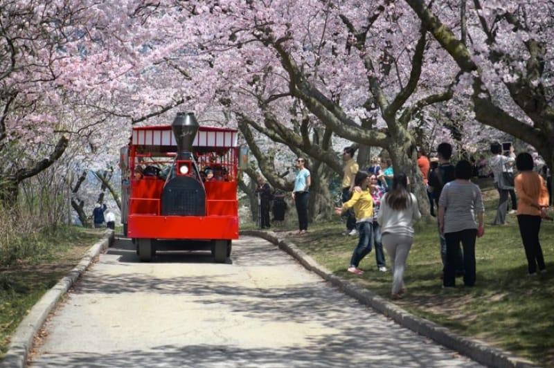 可愛らしいトロリーバスで公園内を周遊