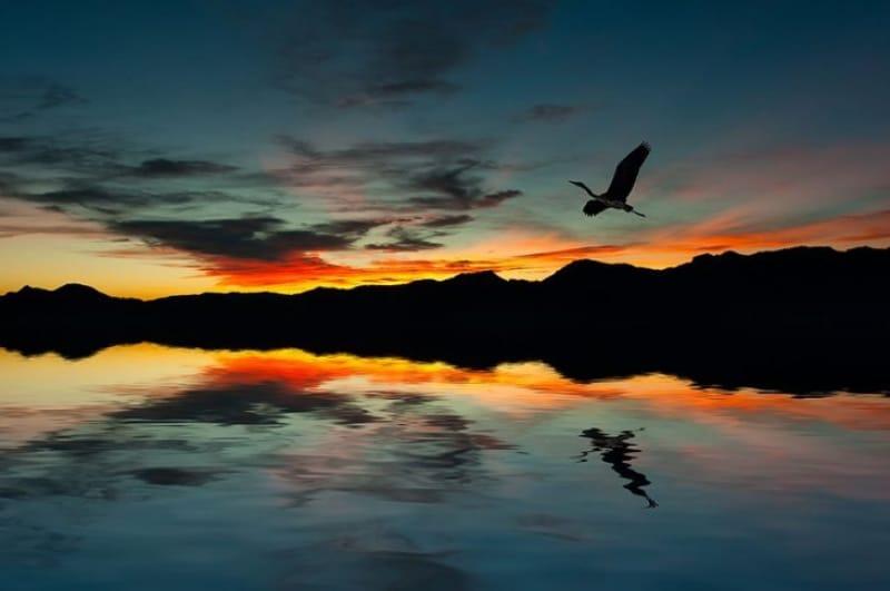 夕焼けと、帰るべき場所へと飛び立つ鳥