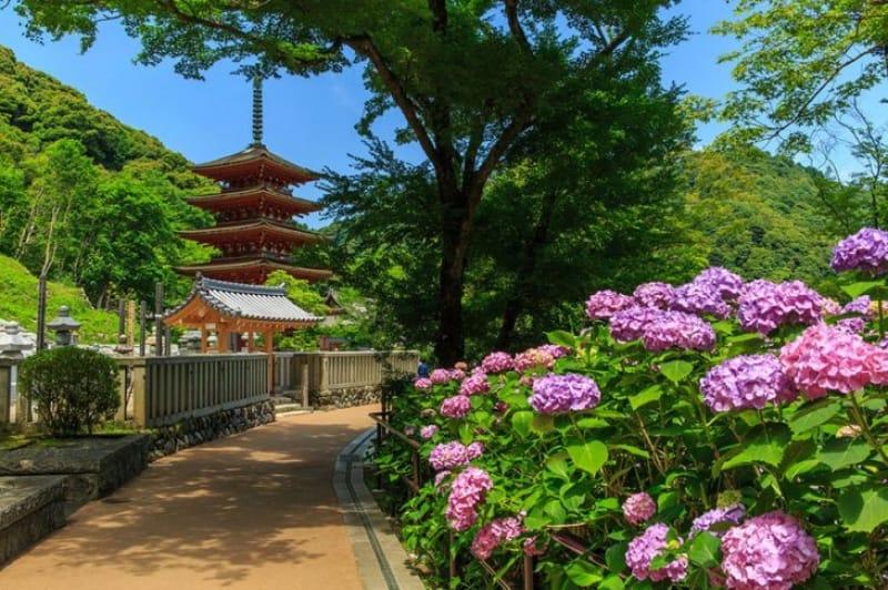 花の寺と称される長谷寺
