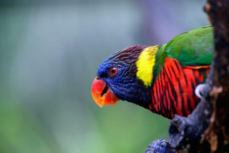 色とりどりの鳥が飛び回る、バードパーク