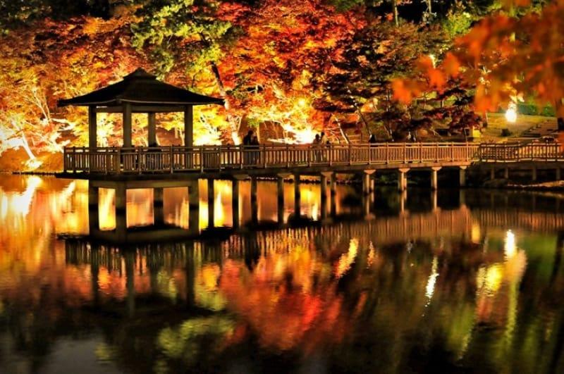 池面に映る夜の紅葉・東公園