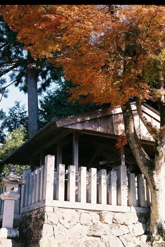 見所の多い名所・吉野山(中千本)