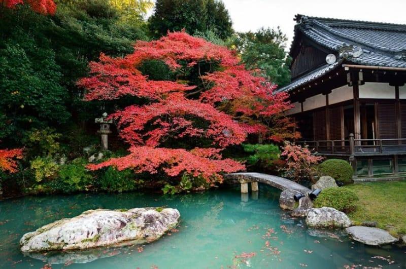 紅葉の季節は外せない「青蓮院門跡(しょうれんいんもんぜき)」