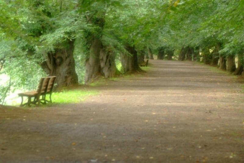 弘前公園ではどんなイベントがやってるの?