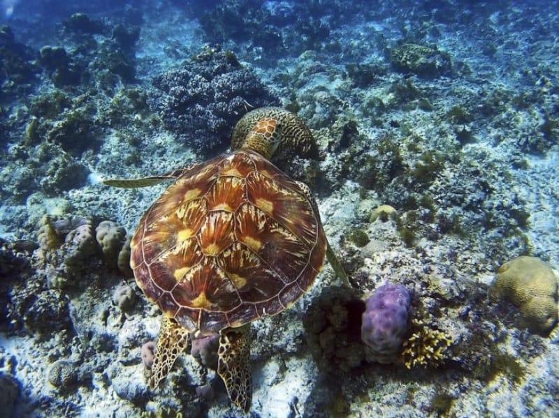 58632:ウミガメや魚達と一緒に泳ぎたい!