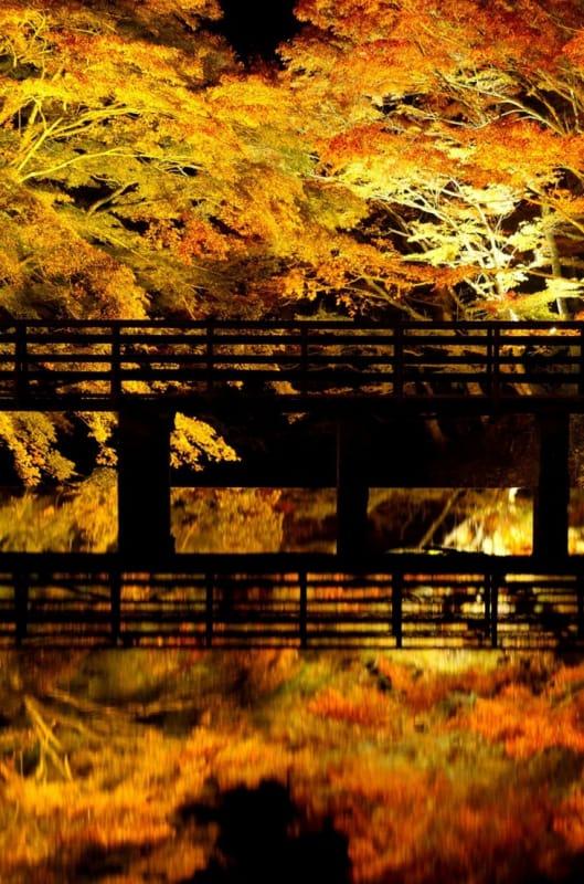 紅葉のアーチが美しい・岩屋堂公園