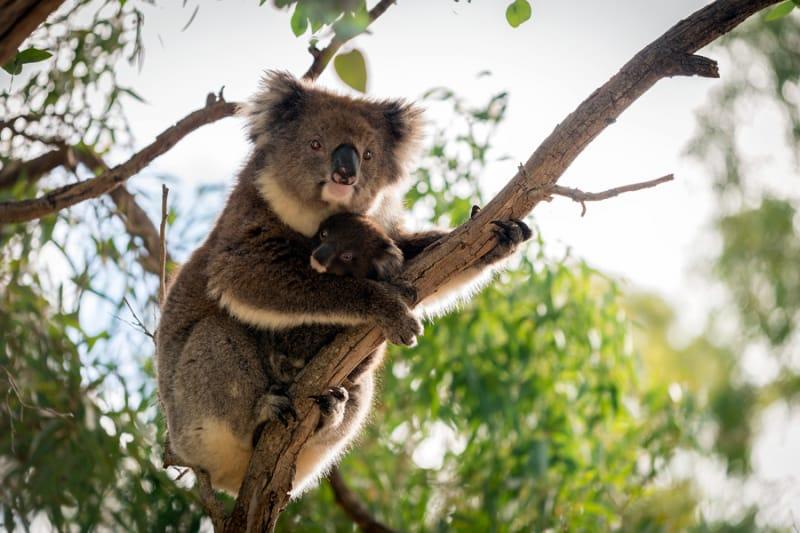 アデレード動物園でオーストラリアならではの動物たちと触れ合おう