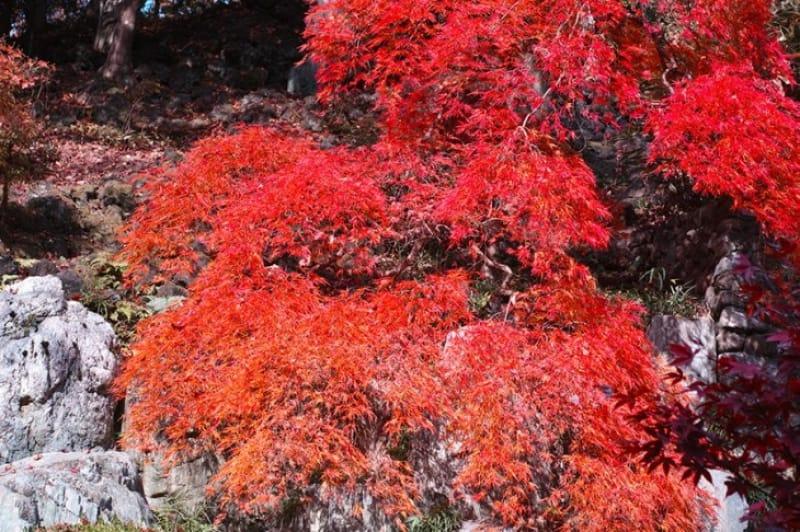 群馬屈指の紅葉が楽しめる庭園・徳明園