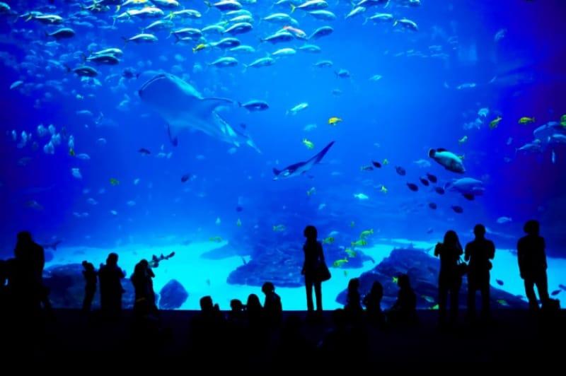 世界最大の水槽を持つジョージア水族館