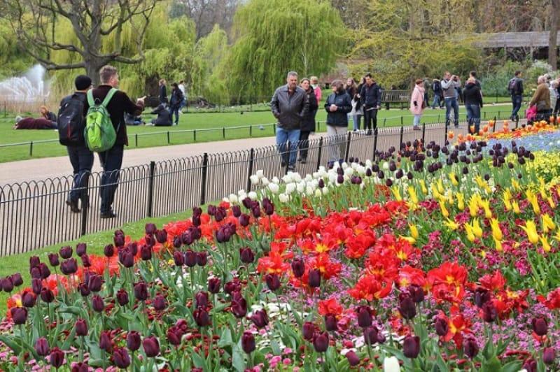 色とりどりの花が春の訪れを告げるセント・ジェームズ・公園