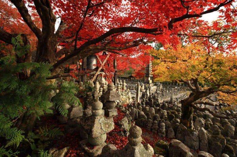 ネーミングから想像つかない紅葉の美しさ