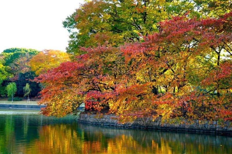 都会のオアシス・大阪市立長居植物園
