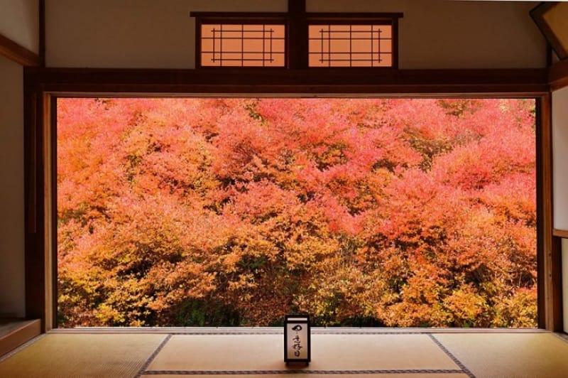 絵画のような紅葉・但馬安國禅寺