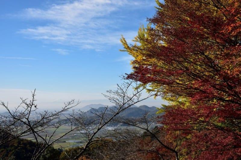 関東平野とともに色づく紅葉・太平山