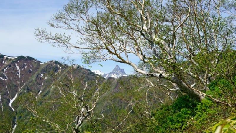 日本の名山が集まるエリア
