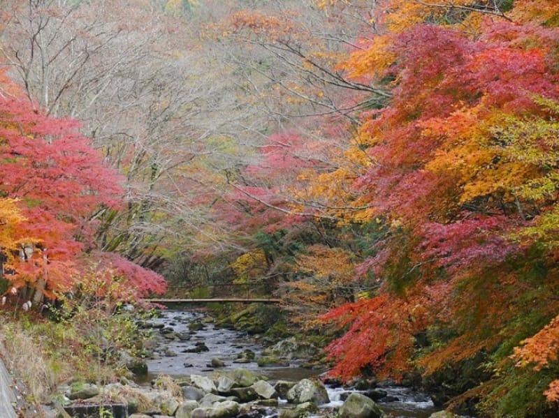 紅葉が彩る渓谷美・花園渓谷