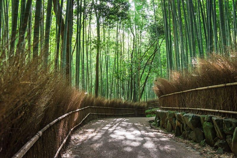 TOP3 竹林の道/京都