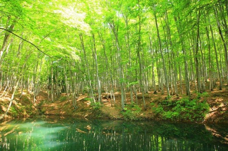 誰もが息を呑む絶景! 美人林