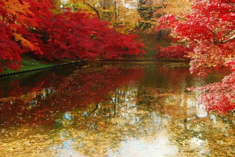 弘前公園は桜だけじゃない!こんなに美しい紅葉