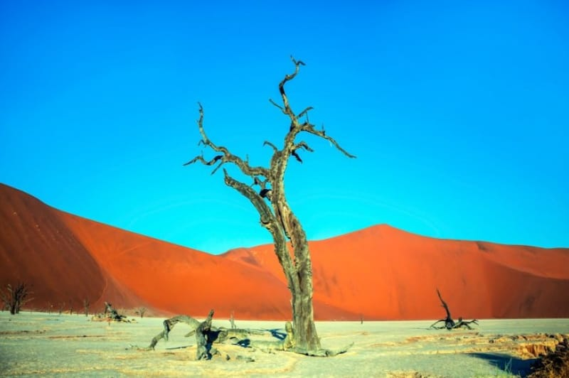 900年前の枯れ木