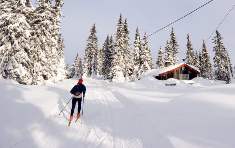 クロスカントリースキーで雪景色を楽しむ