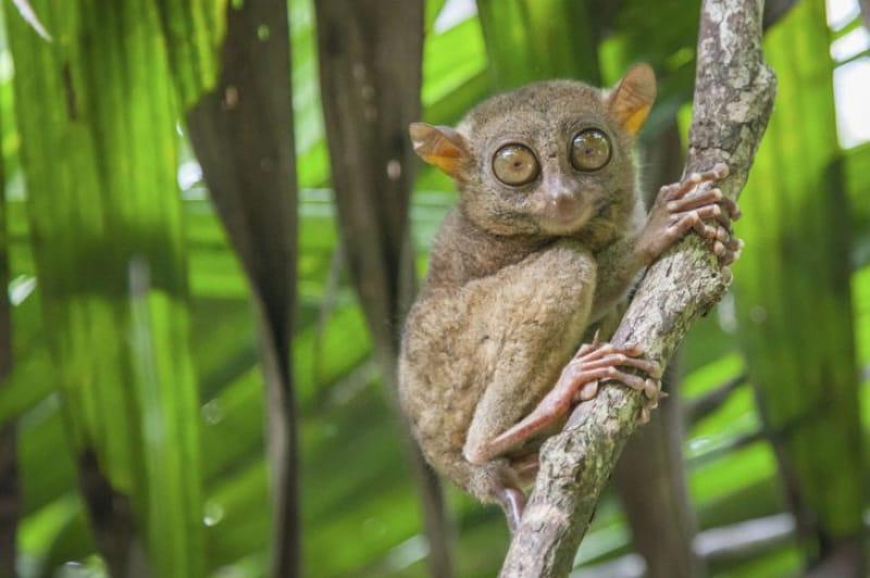 58630:ターシャ観察区域に世界一小さくて可愛い猿に会いに行こう