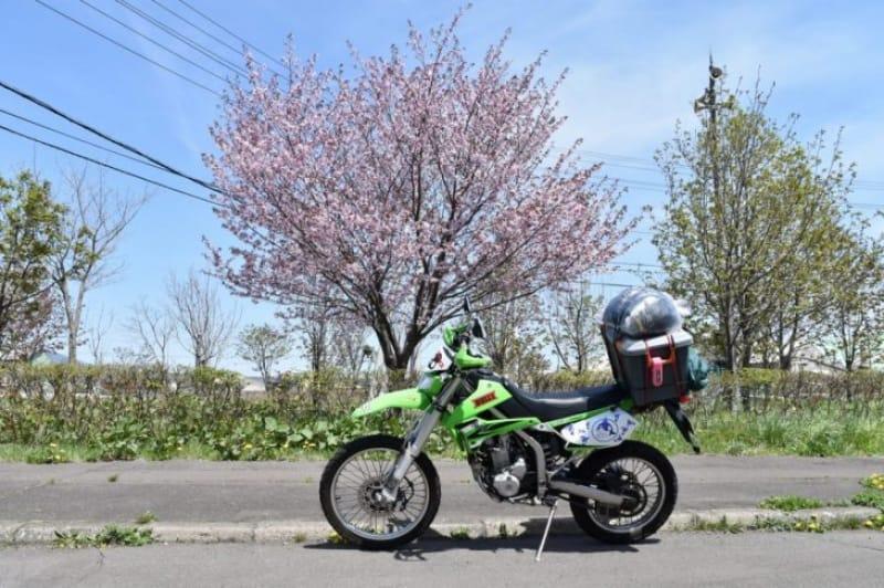 97381:気温も桜前線も上昇中