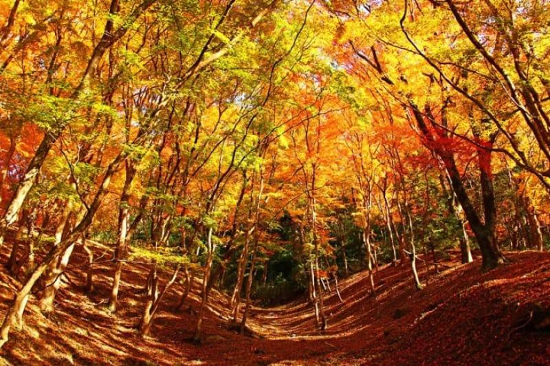 もみじまつりと紅葉のトンネル・香嵐渓