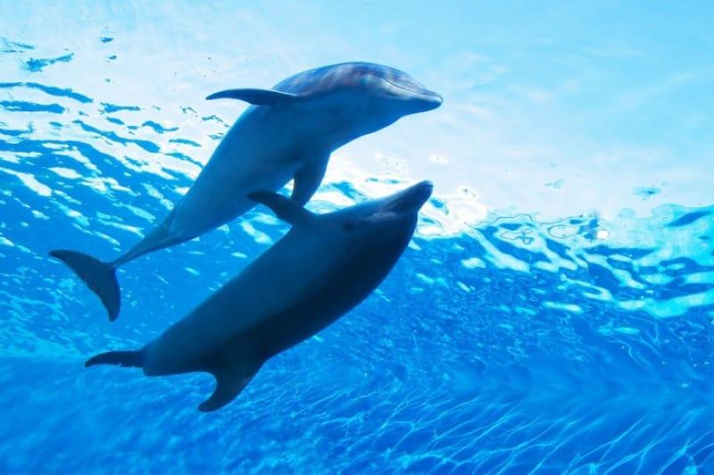 無料スペースで充分楽しめる、海洋博公園
