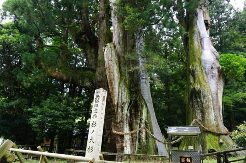 99925:さぁ、絶景スポット【杉の大スギ】へ行こう!