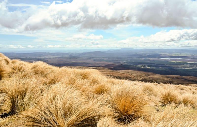 ニュージーランドの先住民マオリ族とは