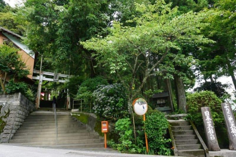 99924:【日本一!】杉の大スギとご対面!