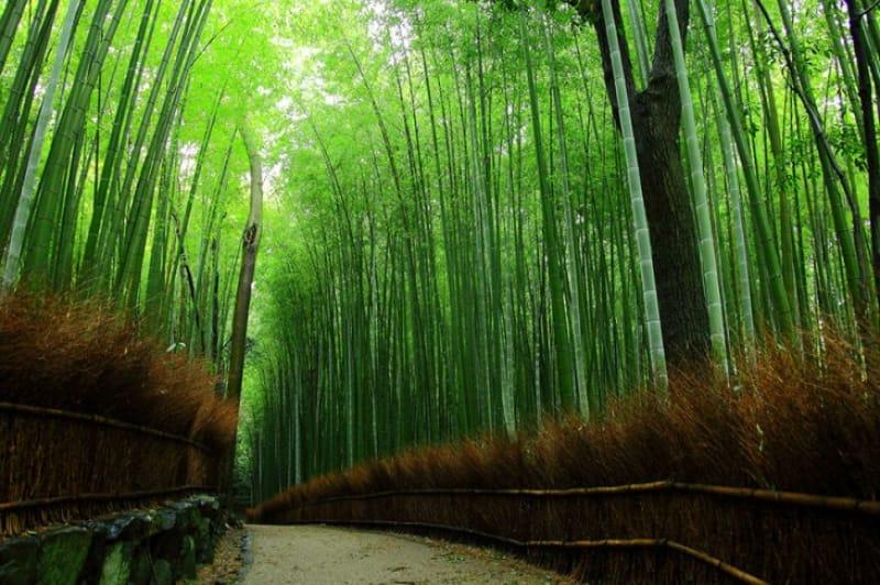 91074:竹林の道/京都